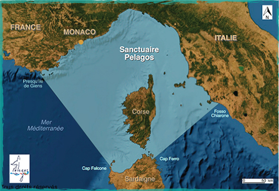Pelagos Sanctuary area
